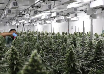 Revolutionary Clinics Indoor Grow Facility